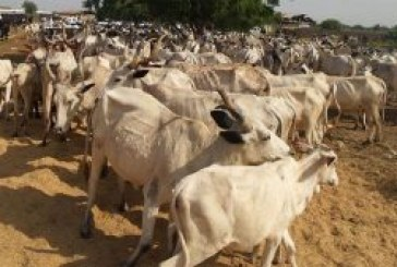 Anti-open grazing law takes off in Benue